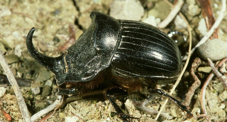 What Is the Strongest Insect?