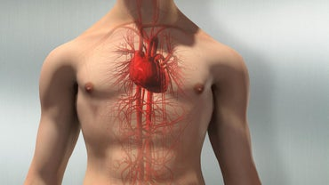 What Is the Structure of the Circulatory System?