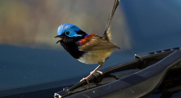 What Is The Superstition About A Bird Hitting A Windshield