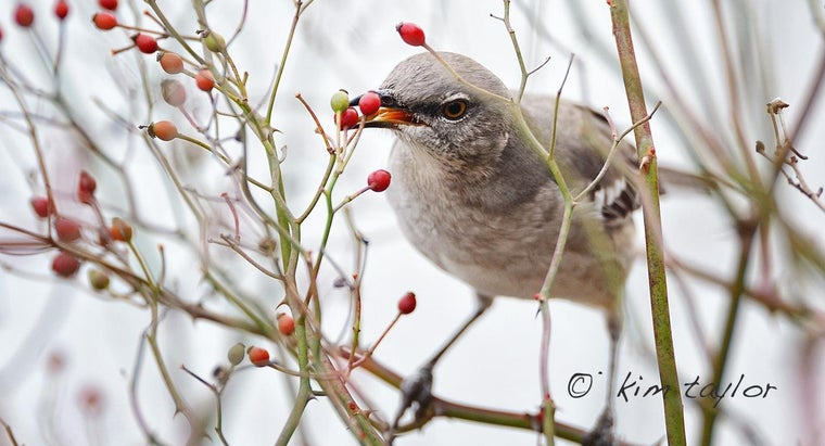 What Is The Symbolic Meaning Of Mockingbirds Reference