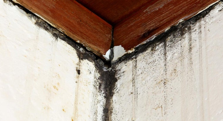 What Are the Symptoms of Black Mold Exposure?