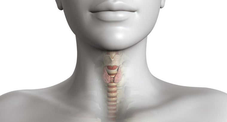 What Are the Symptoms of Thyroid Nodules?