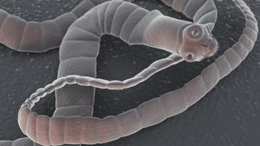 How Do Tapeworms Move?