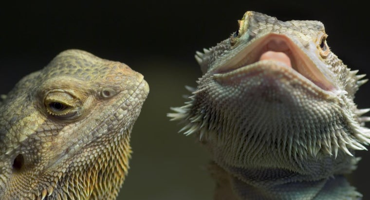 Warning Signs Of An Unhealthy Bearded Dragon