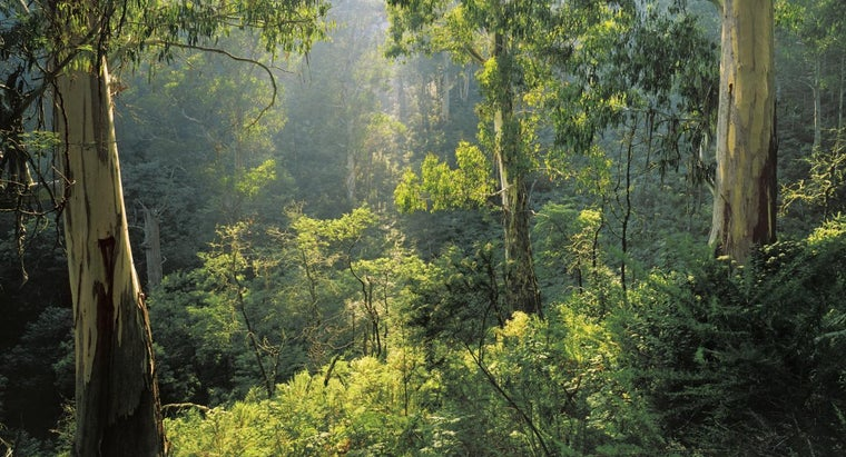 What Is a Temperate Deciduous Forest?