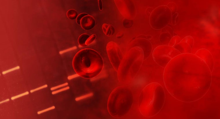 At What Temperature Does Human Blood Boil?