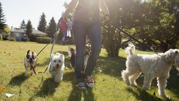 What Is the Tennessee Leash Law?