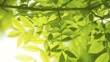 What Releases Oxygen in Photosynthesis?
