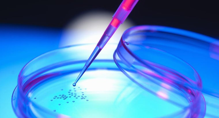 What Is Therapeutic Cloning?