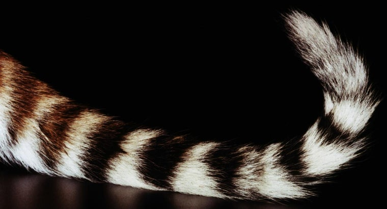 Why Do Tigers Have Tails?