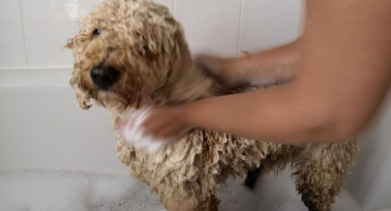What Are Some Tips for Labradoodle Grooming?