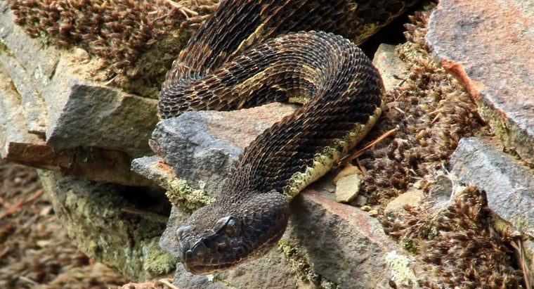 What Are Some Tips for Snake Identification in Texas?