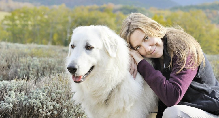 What Are Some Tips for Training a Great Pyrenees?