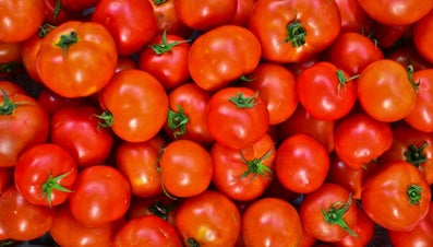 When Are Tomatoes in Season?