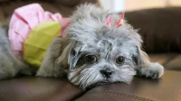 What Are Some Cute Names For A Girl Yorkie Dog Referencecom