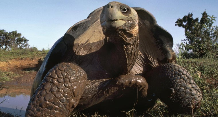 What Are Some Tortoise Facts?