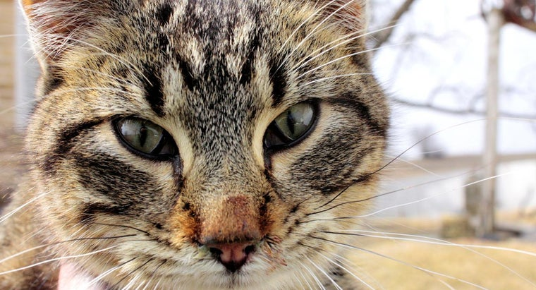 How Do You Treat Ear Mites in Cats?