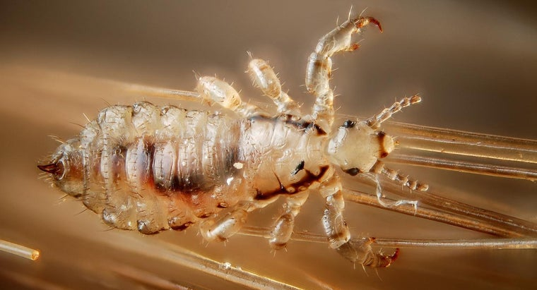 How Do You Treat Head Lice at Home?