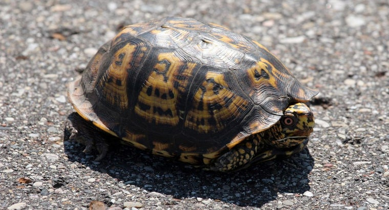 How Do Turtles Adapt to Their Environment?
