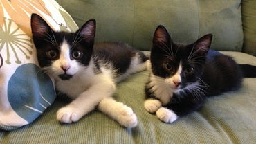 What Are Some Twin Cat Names?