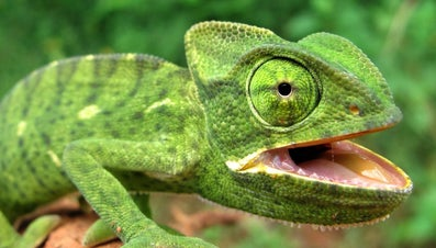 What Type of Body Covering Do Reptiles Have?
