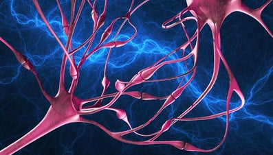 What Type of Tissue Carries Messages Throughout the Body?