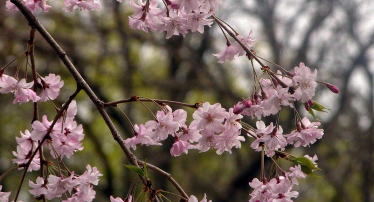 What Are the Types of Japanese Flowers?
