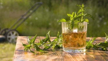 What Are Some Types of Mint Julep Glasses?
