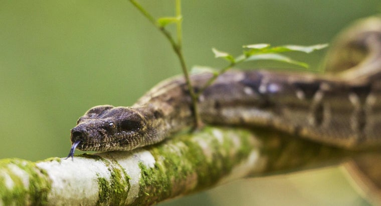 Which Types of Plants Repel Snakes?