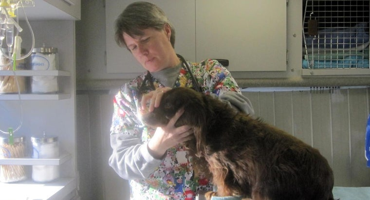 What Is a Typical Day at Work for Veterinarians?