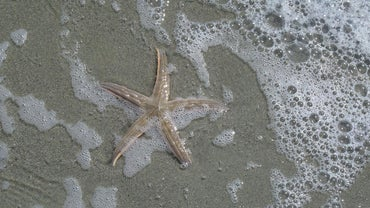 What Are Some Unique Characteristics of Echinoderms?