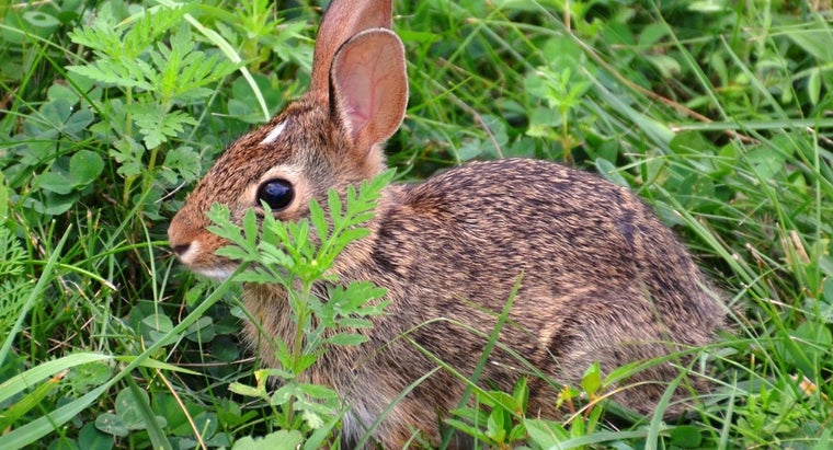 What Do You Use to Keep Rabbits From Eating Plants?