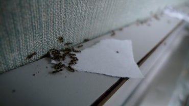 how do you get rid of ants in a car. Black Bedroom Furniture Sets. Home Design Ideas