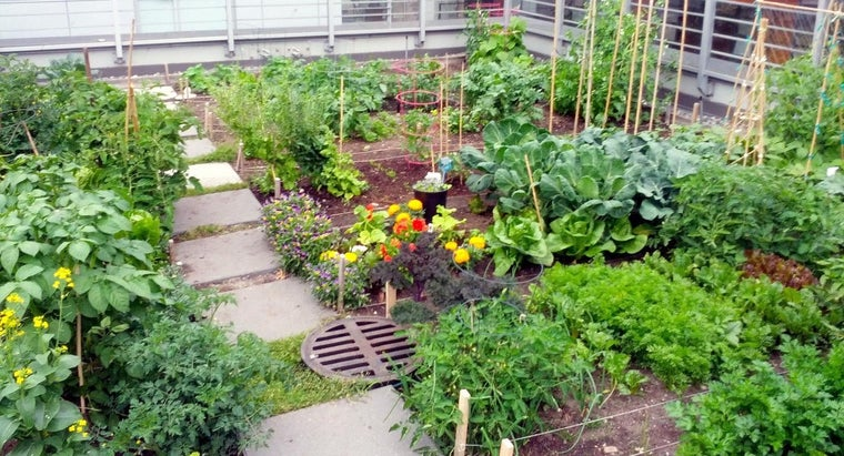 What Vegetables Can I Plant in June?