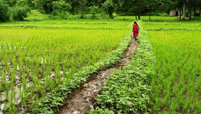 What Vegetation Grows Naturally in India?