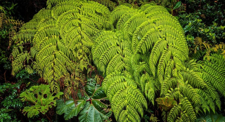 How Often Do You Water Ferns?