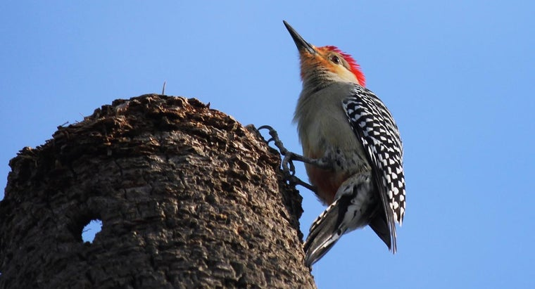 What Are Some Ways of Getting Rid of Woodpeckers?