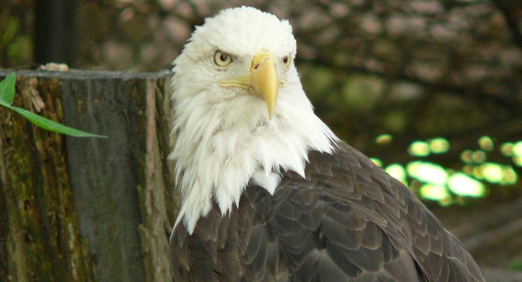 On Which Website Can You See the Pennsylvania Eagle Webcam?