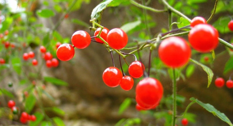 What Are the Weight Loss Benefits of Goji Berries?