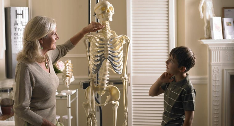What Are the Four Types of Bones in the Human Body?
