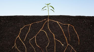 What Are the Two Main Functions of Roots?