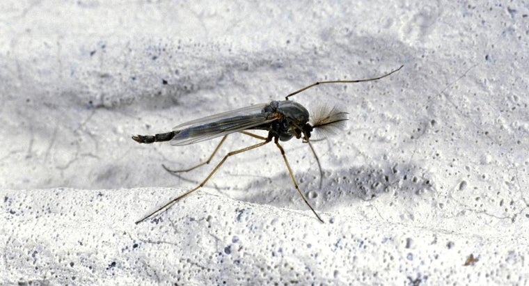 What Attracts Gnats?
