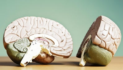 What Connects the Two Hemispheres of the Brain?