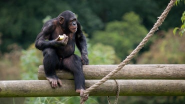 What Do Monkeys Eat in the Jungle?