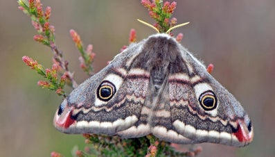 What Do Moths Eat and Drink?