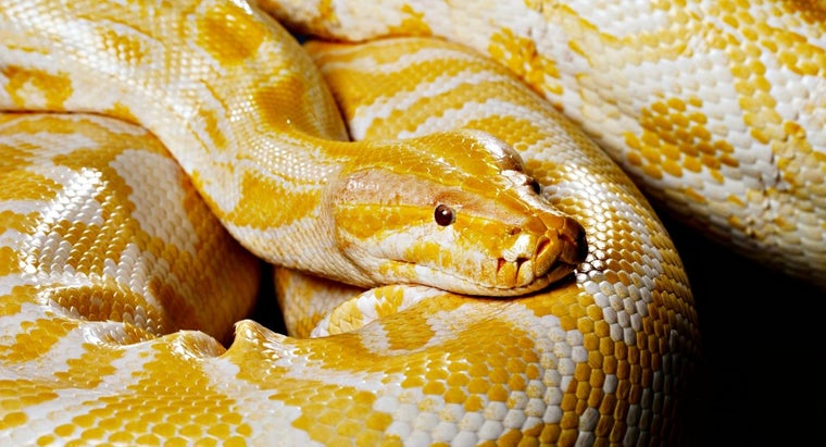 What Do Pet Snakes Eat?