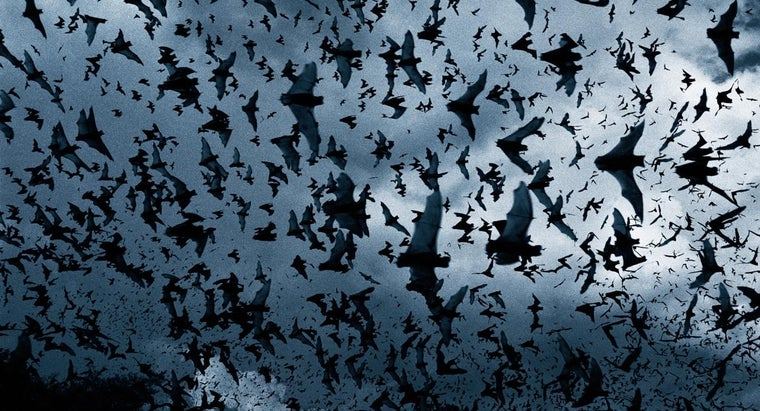 What Do You Call a Group of Bats?