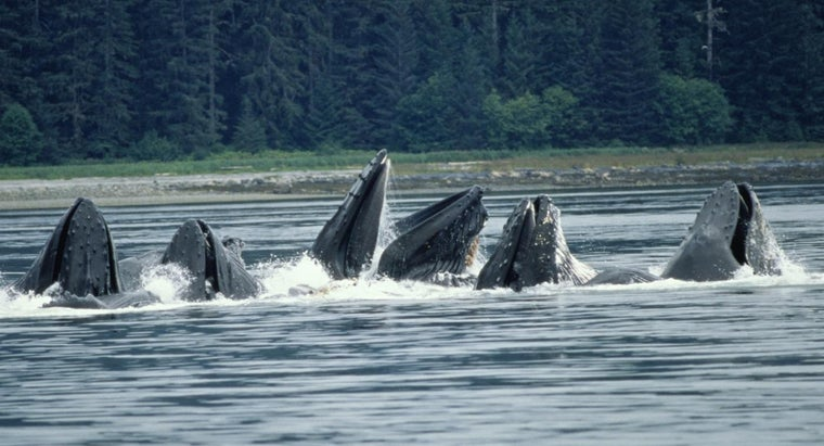 What Do You Call a Group of Whales?