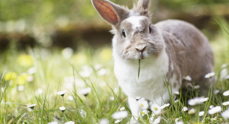 What Does a Wild Rabbit Eat?
