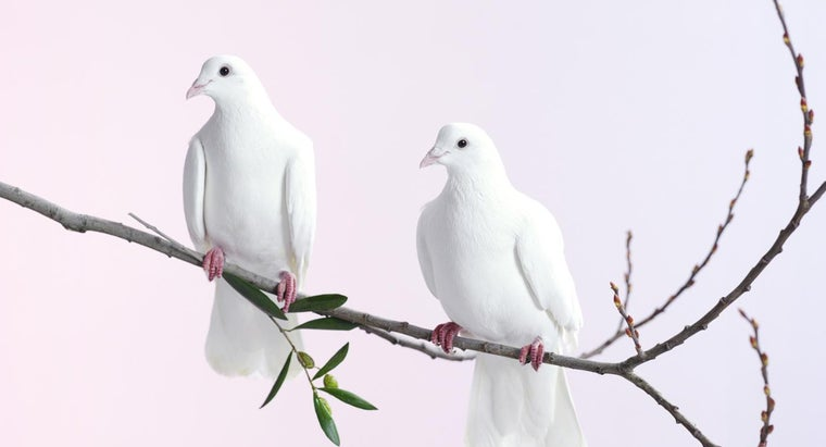 What Does The Dove Symbolize Reference